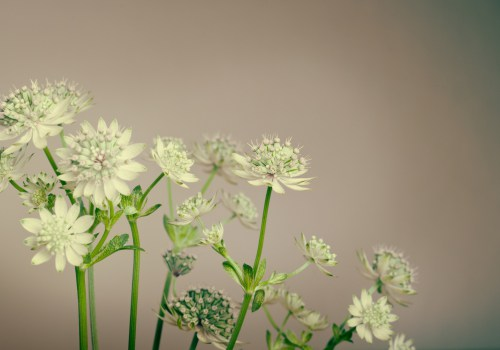 plant-1245950_1920