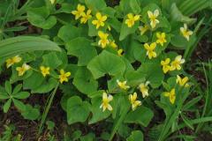 009c00eea92f4971a149a3052e54afdb--poisonous-plants-edible-plants